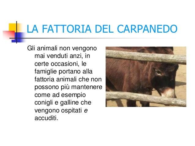 LA FATTORIA DEL CARPANEDO Gli animali non vengono mai venduti anzi, in certe occasioni, le famiglie portano alla fattoria ...