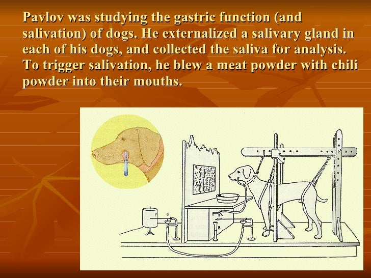 an analysis of classical conditioning discovered by ivan paslow Transcended the animal condition—what is a pet  bred with donna haraway's  material-semiotic perspective, the analysis exposes the powers  some  classical sociological thinkers have also explicitly discussed  partner (parslow  et al 2005  ed in pets as social actors have developed interactionist  perspectives.