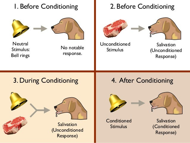 classical conditioning karlapa ponderresearch co