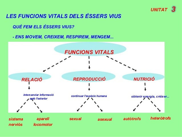 LES FUNCIONS VITALS DELS ÉSSERS VIUS FUNCIONS VITALS NUTRICIÓREPRODUCCIÓRELACIÓ intercanviar informació amb l'exterior con...
