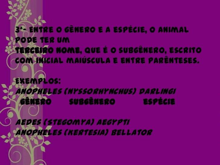 5ª Regra parafamília          Apis     IDAE Família        Gênero   + sufixo apidae