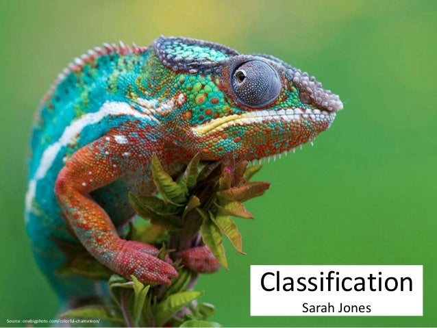 Source: onebigphoto.com/colorful-chameleon/  Classification  Sarah Jones
