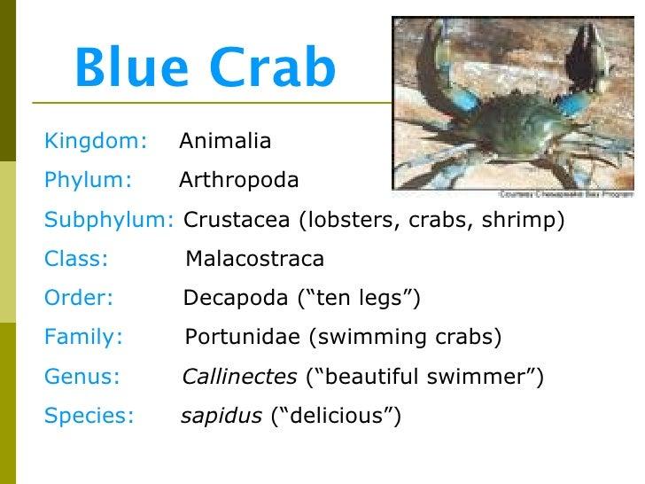 Blue crab order / Mesquite tx gun show