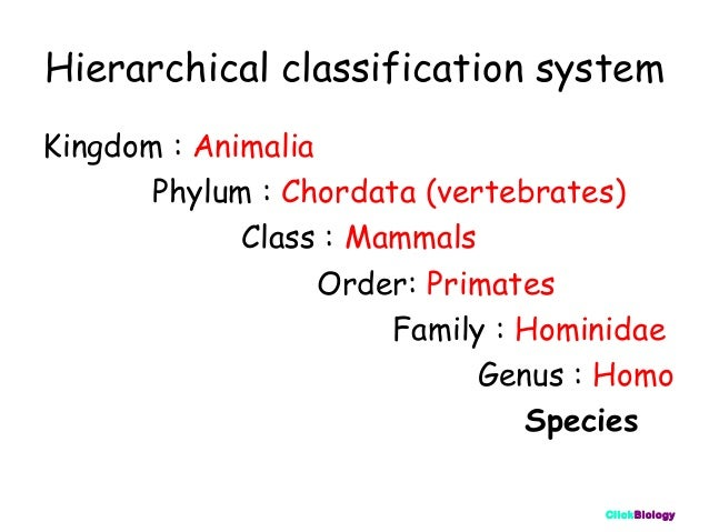 Classification and Keys – Classification Worksheet Biology