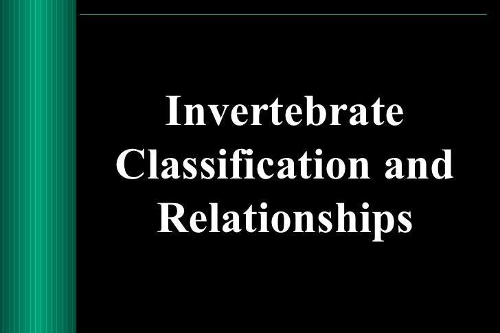InvertebrateClassification and  Relationships