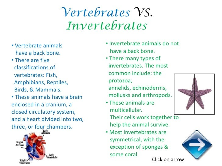 Classification Of Animals – Vertebrates and Invertebrates Worksheets