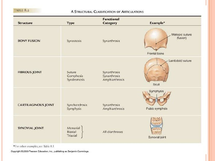 Classification Of Articulations Synchondroses are different than symphyses (secondary cartilaginous joints) which are formed of fibrocartilage. classification of articulations
