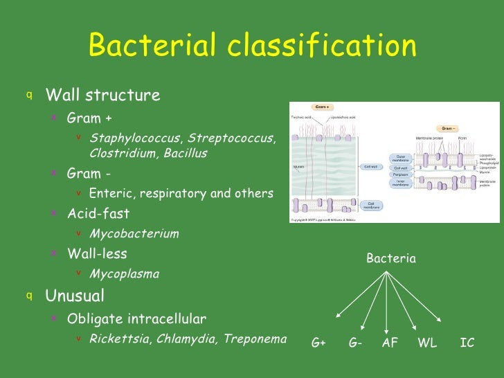 Classificationof Bacteria