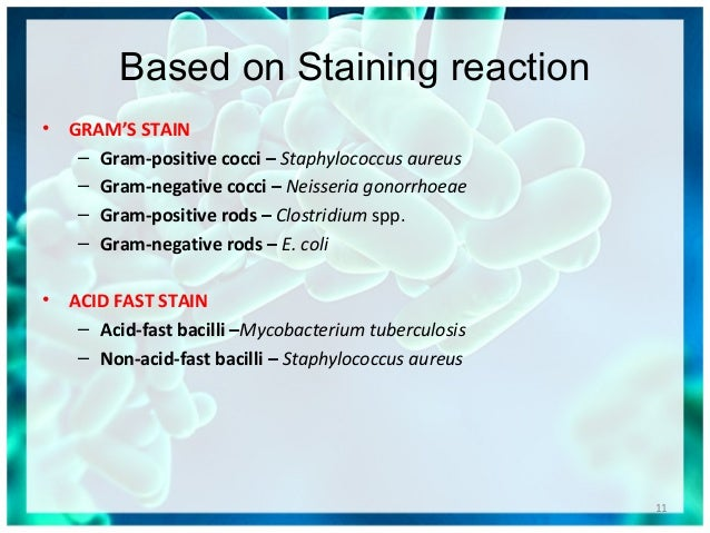 Gram Stain  Lab Tests Online