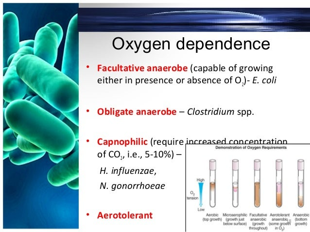 Oxygen dependence • Facultative anaerobe (capable of growing either in presence or absence of O2)- E. coli • Obligate anae...
