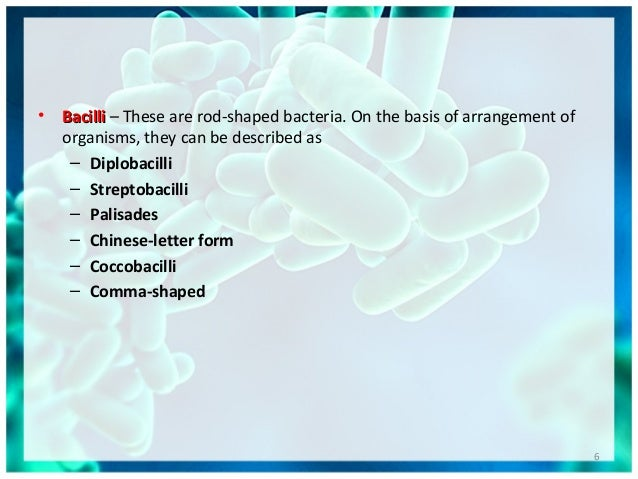 • BacilliBacilli – These are rod-shaped bacteria. On the basis of arrangement of organisms, they can be described as – Dip...