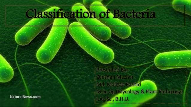 Classification of Bacteria Presented By:- Zeeshan Mazhar Md. Mahtab Rashid M.Sc Ag (Mycology & Plant Pathology) I.Ag.Sc , ...