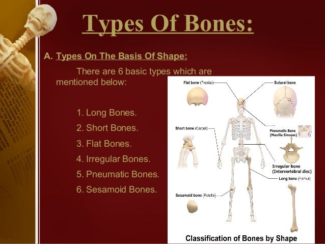 Classification of bones (anatomy)