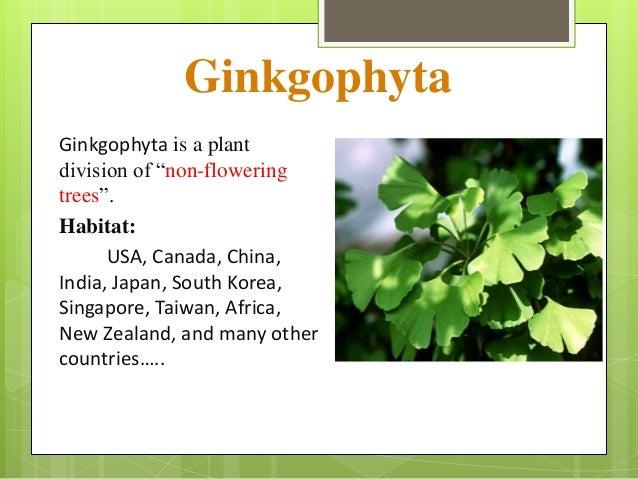 Classification Of Gymnosperms