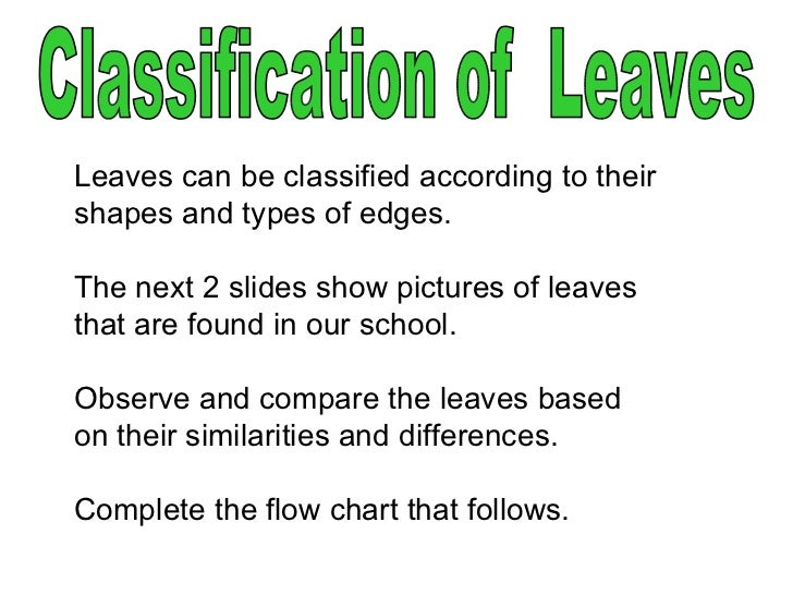 Leaves can be classified according to their shapes and types of edges.  The next 2 slides show pictures of leaves that are...