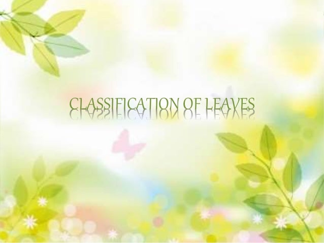 CLASSIFICATION OF LEAVES