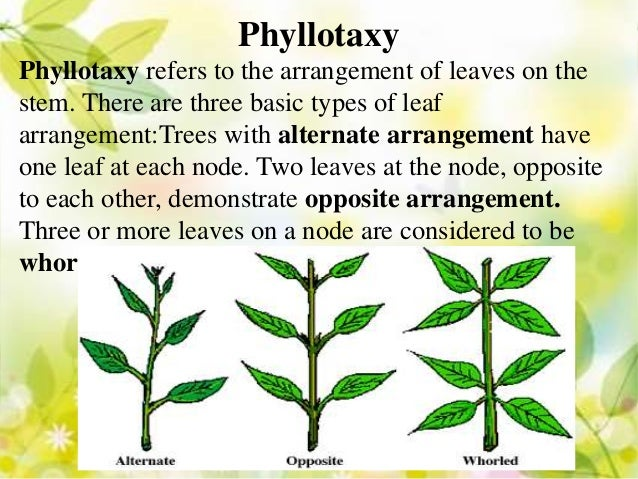 brief classification of leaves