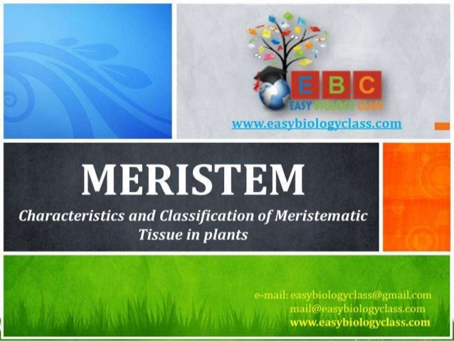 For detailed description of this topic: Please Click on.. http://www.easybiologyclass.com/meristematic-tissue-structure-an...