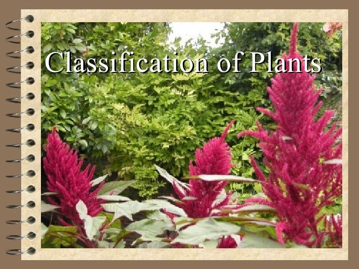 Classificationofplantsjpgcb - Best of ppt flowers scheme