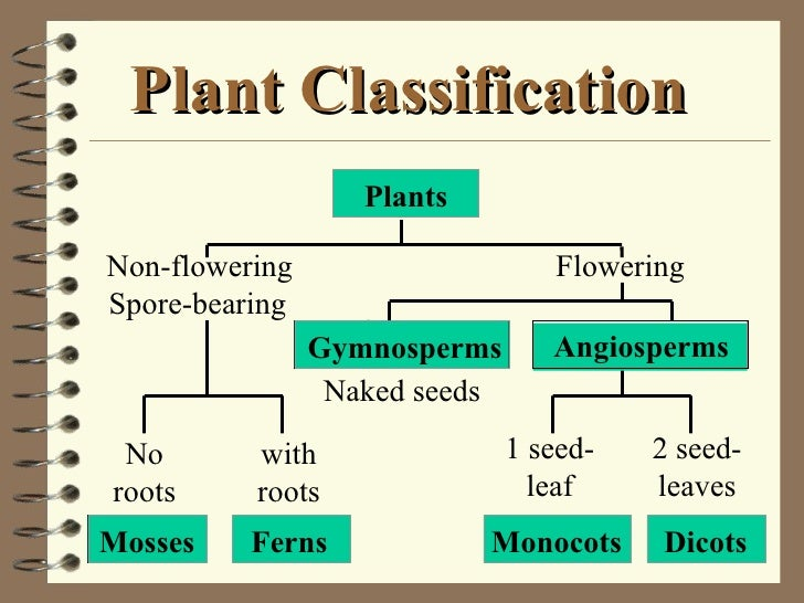 Classification Of Plant Kingdom Pdf Download
