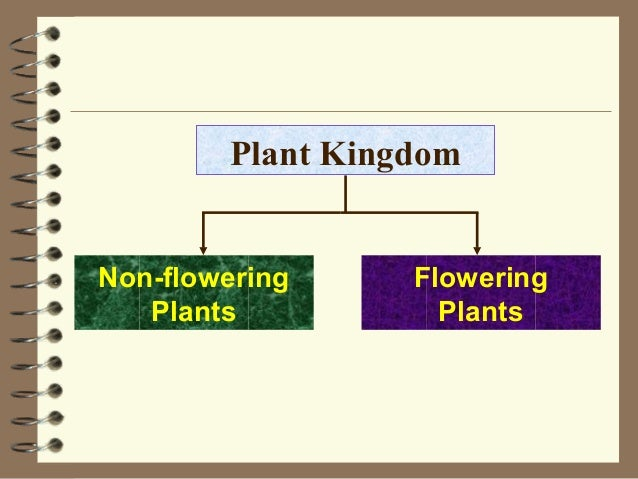 Classification of plan...
