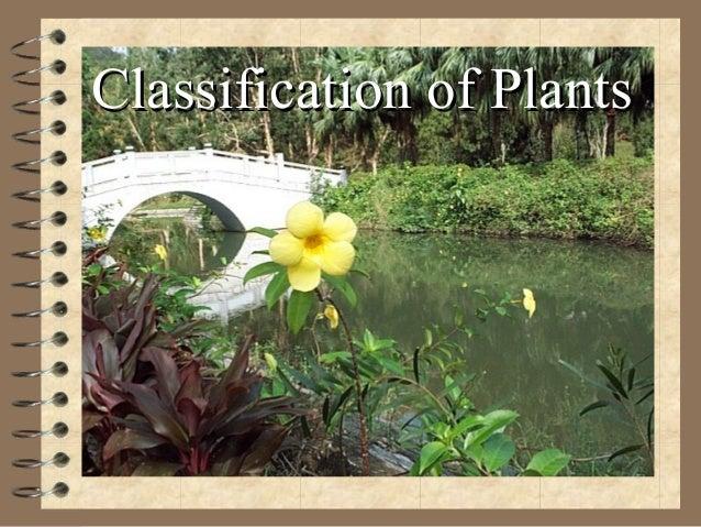 Classification of PlantsClassification of Plants