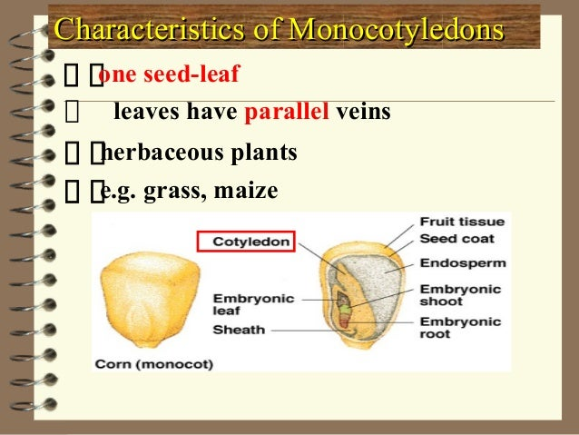 Plant ClassificationPlant Classification Non-flowering Plants Flowering Spore- bearing Naked seeds No roots with roots Mos...
