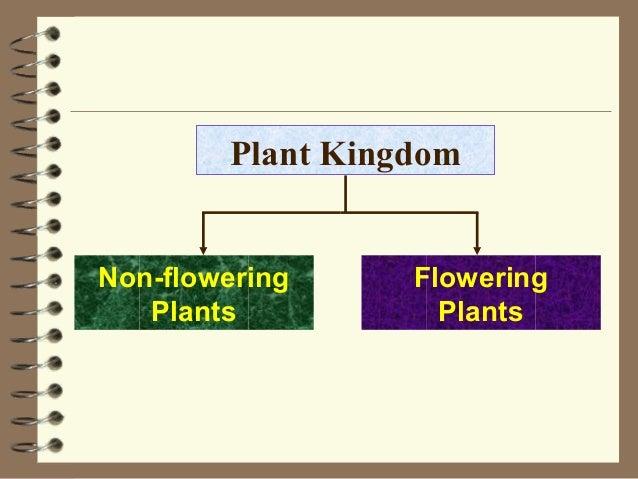 Plant Kingdom Flowering Plants Non-flowering Plants