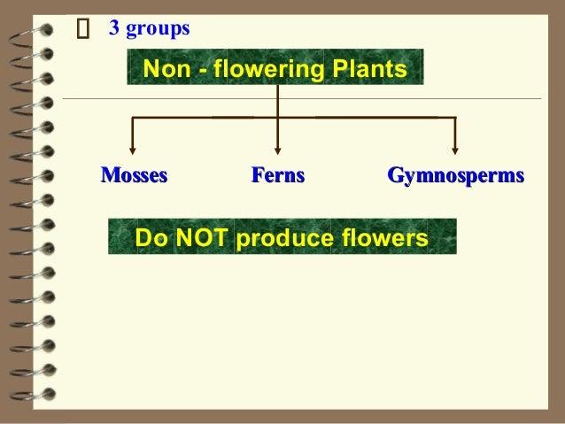 3 groups FernsFernsMossesMosses GymnospermsGymnosperms Non - flowering Plants Do NOT produce flowers