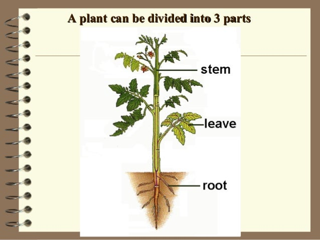 A plant can be divided into 3 partsA plant can be divided into 3 parts