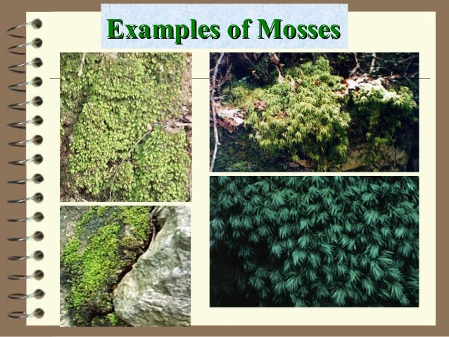 Examples of MossesExamples of Mosses