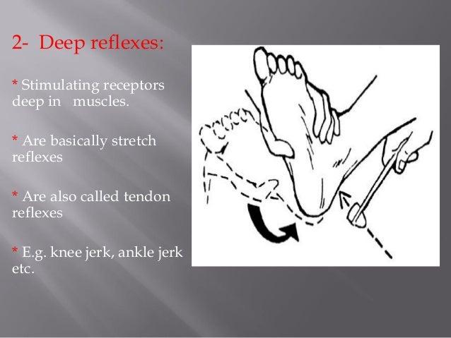 Classification of reflexes