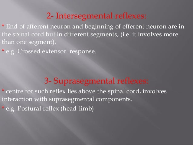 classifications of reflexes In 2003 the present authors suggested a diagnostic lbp classification system   all 3 findings positive: sensory loss, paresis, loss of reflexes (p) any nerve.