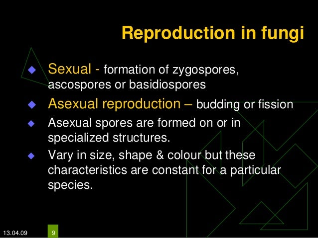 Basidiospores asexual reproduction
