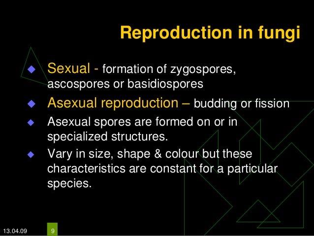 Basidiospores asexual reproduction