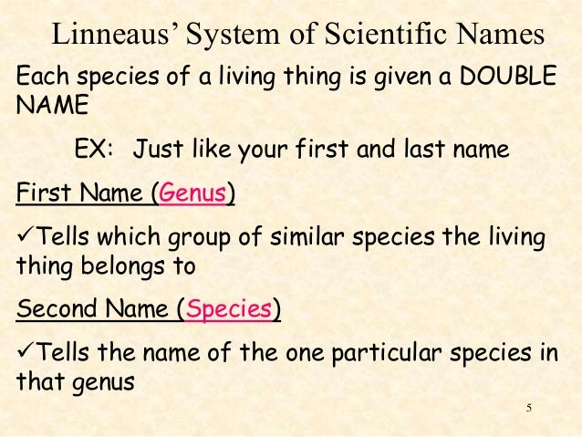 binomial system The five kingdoms and the binomial system of nomenclature - the five kingdoms and the binomial system of nomenclature fred searcy biology why study evolution commonly known as the scorpion fly developing the scientific naming system binomial nomenclature.