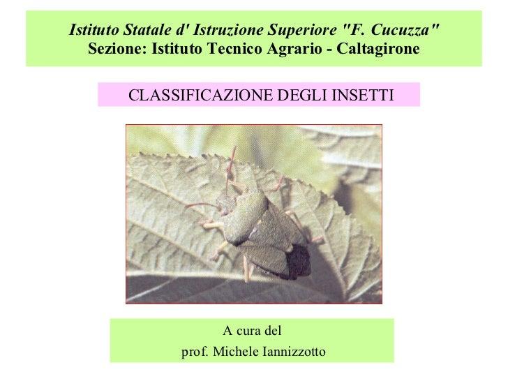 """Istituto Statale d' Istruzione Superiore """"F. Cucuzza"""" Sezione: Istituto Tecnico Agrario - Caltagirone <ul><li>CL..."""