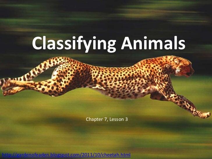 Classifying Animals                                   Chapter 7, Lesson 3http://gardenofeaden.blogspot.com/2011/10/cheetah...