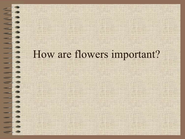 How are flowers important?