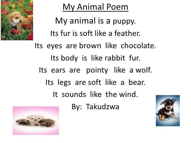 a funny poem on two animals 1067 quotes have been tagged as animals: in the course of two days i was able to add a fox, a goose funny quotes 7k.