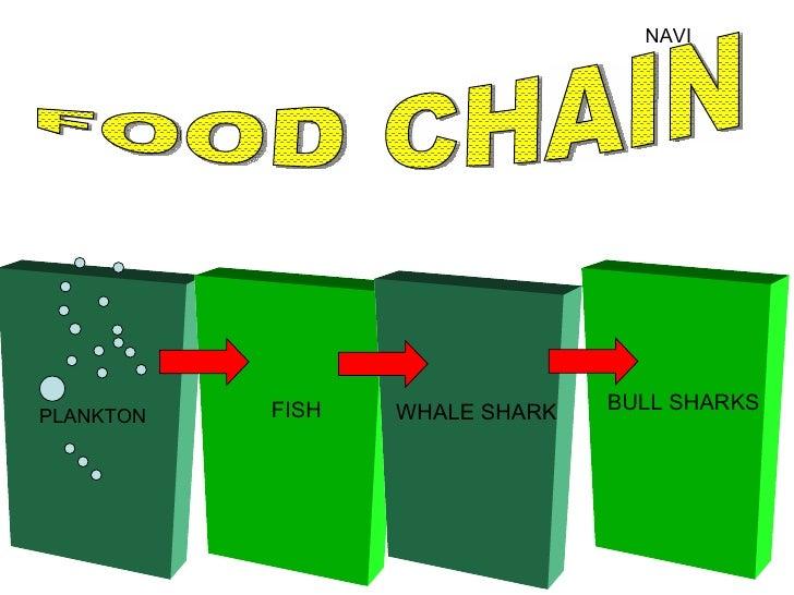 NAVI FISH WHALE SHARK PLANKTON FOOD CHAIN BULL SHARKS