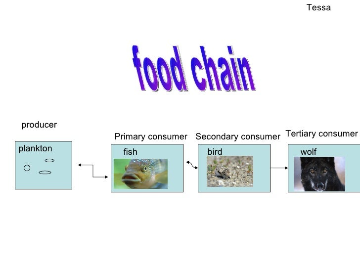 food chain project Food chains and webs the next level in the food chain is made up of primary consumers, or organisms that eat food produced by other organisms.