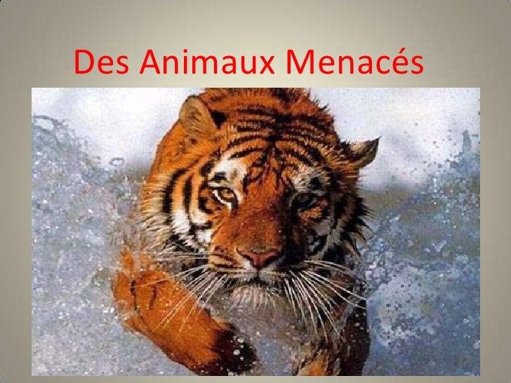 Des Animaux Menacés<br />