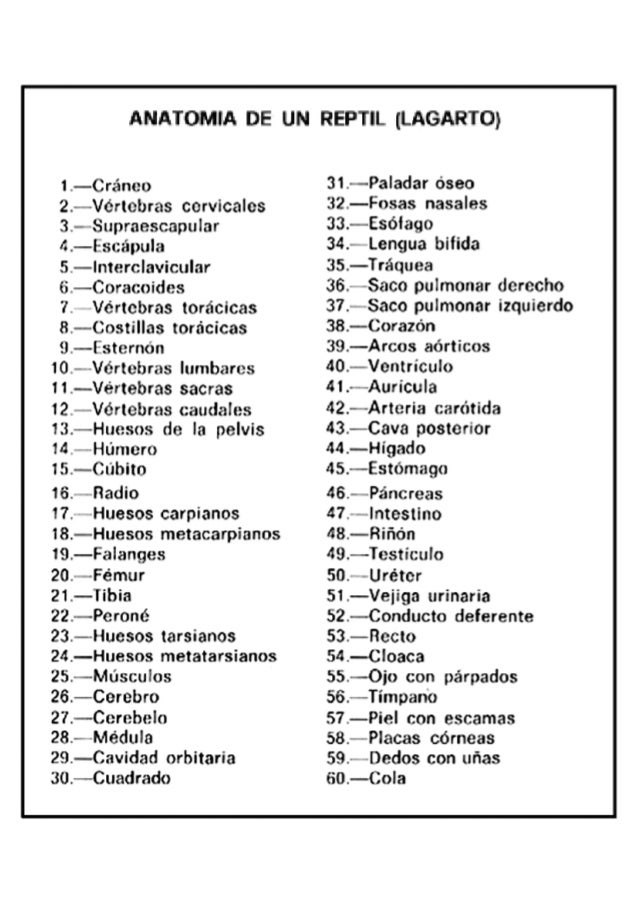 Claves anatomia reptil