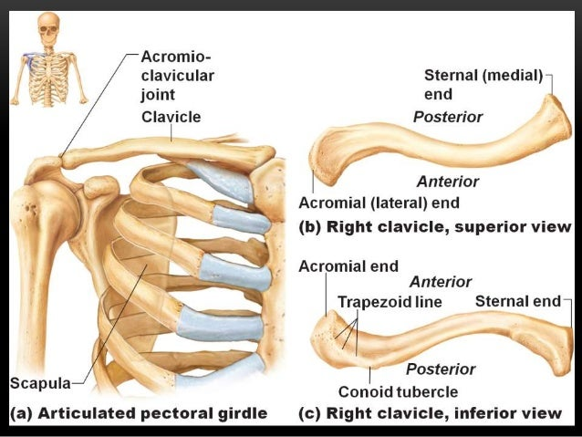 clavicle fracture A clavicle fracture (broken collarbone) is a common sports injury see at typical rehab exercise program a therapist may use to speed full recovery.