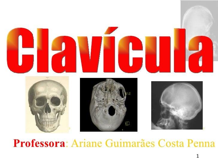 <ul><ul><li>Professora : Ariane Guimarães Costa Penna </li></ul></ul>Clavícula 1 3 2