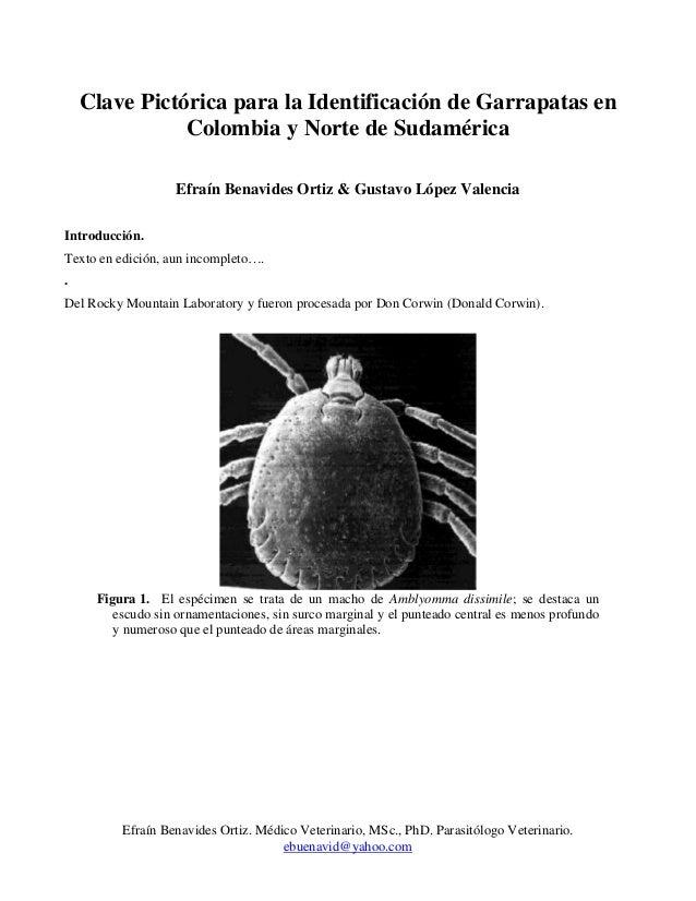 Efraín Benavides Ortiz. Médico Veterinario, MSc., PhD. Parasitólogo Veterinario. ebuenavid@yahoo.com Clave Pictórica para ...