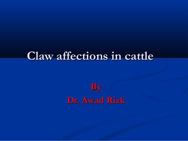 Claw affections in cattle            By       Dr. Awad Rizk