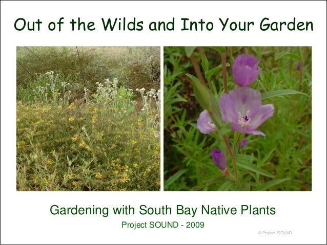 Out of the Wilds and Into Your Garden    Gardening with South Bay Native Plants                Project SOUND - 2009       ...