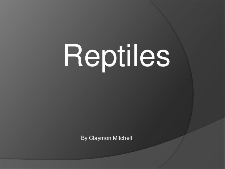 Reptiles By Claymon Mitchell